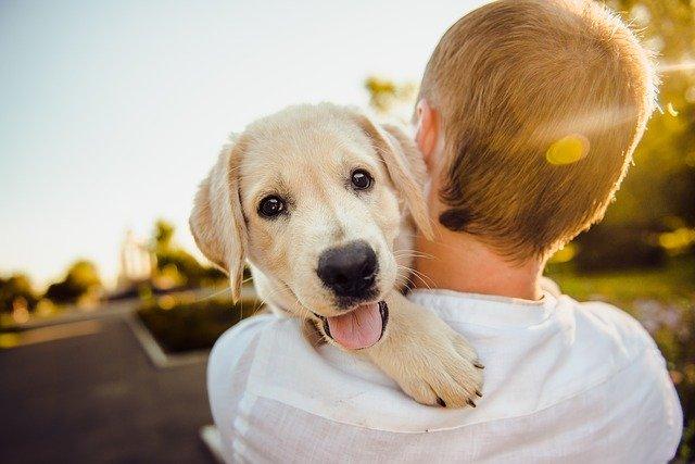 roztomilý pes